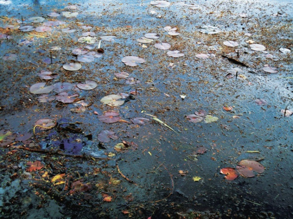 Pond Study #2 05-07-13