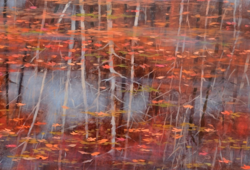 TM8437 Red Drift - detail from center right showing still water tree reflections and floating leaves