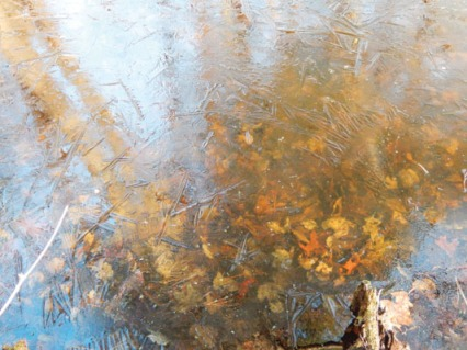 Looking through ice to leaves below, with ghostly reflections of trees