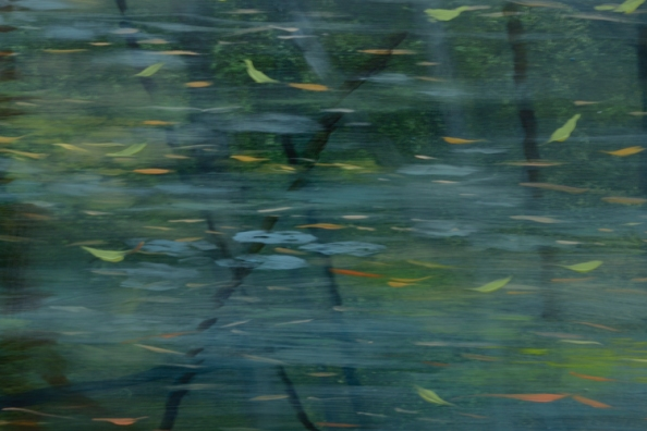 TM8358 THe Afternoon Deepens - detail from upper right corner with falling leaves, reflections, a few young lily pads