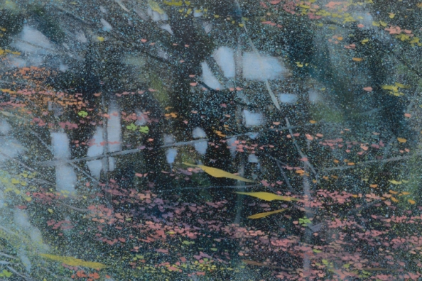 TM8523 Pixie Dust - detail from upper left with floating pollen, duckweed, and fallen tree buds, reflected trees