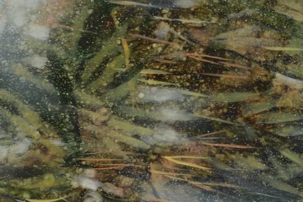 TM8524 From a Puddle in the Woods - detail from lower right of center wit reflected trees, ferns, stems, and pollen