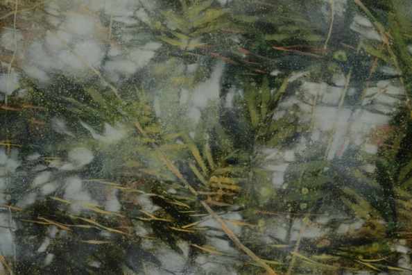 TM8524 From a Puddle in the Woods - detail with reflected trees, ferns pollen