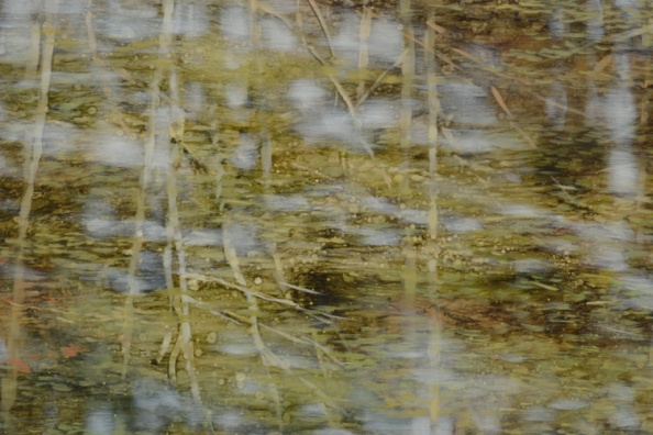 TM8544 Pond Logic - detail from lower left of center with floating vegetation and reflections