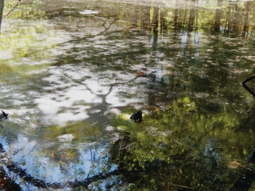 Photogrpah of the pond at Hamlen Woods showing tree shadows on the pollen-dusted water's surface