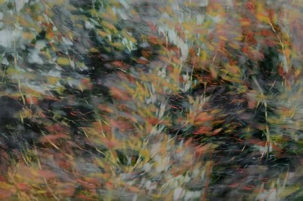 TM8573 Treehouse Dream #1 36x54 oil on panel