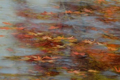 TM8422 Inside Autumn - detail from low and left of center