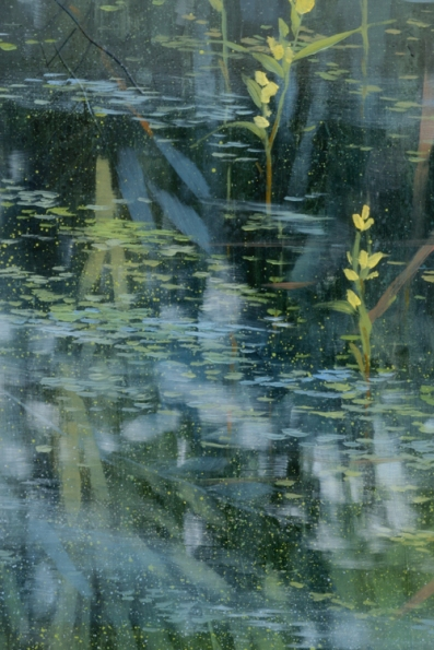 TM8706 Pond's Edge (with sleeping lily) - detail from left side with reflections and blooming bladderwort