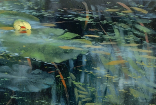 TM8706 Pond's Edge (with sleeping lily) - detail with bullhead lily and reflections