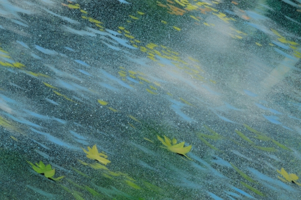 TM8711 Cloud-gazing #2 detail from foreground with floating leaves on light-dappled pond surface
