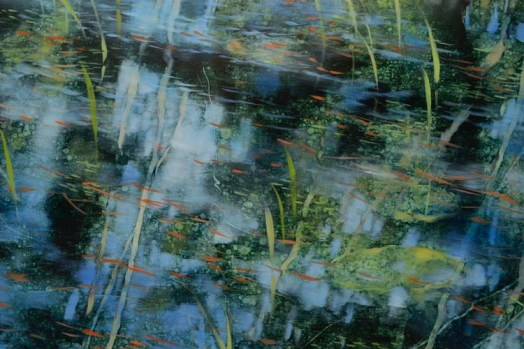 TM8921 Ode to the Shallows - detail from center with reflections, grasses, and floating pine needles